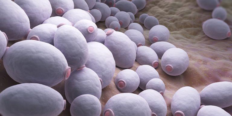 Kandida býva často dôsledkom antibiotickej liečby, nesprávnych hygienických návykov alebo tiež ako dôsledok oslabenia imunitného systému.